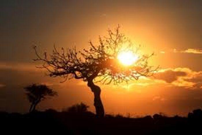 meditatia cu soarele, luna sau copacul